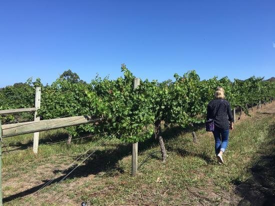 Brygon Reserve Wines