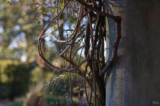 The Blue Mountains Botanic Garden: Some Vines On The Old Structures.