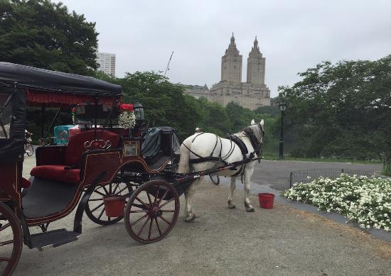 central park picture of nyc horse carriage rides new york city tripadvisor. Black Bedroom Furniture Sets. Home Design Ideas