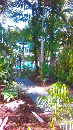 Rainforest Motel: Pathway to swimming pool