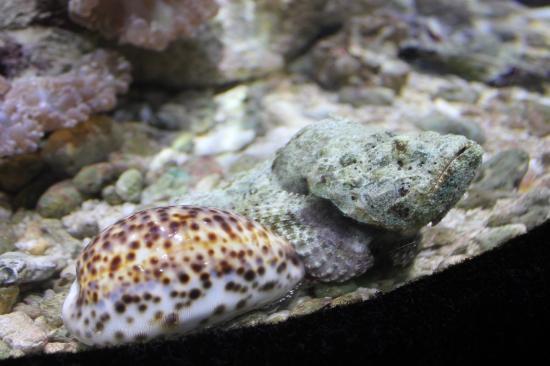Eden Island, Σεϋχέλλες: Eden Aquarium