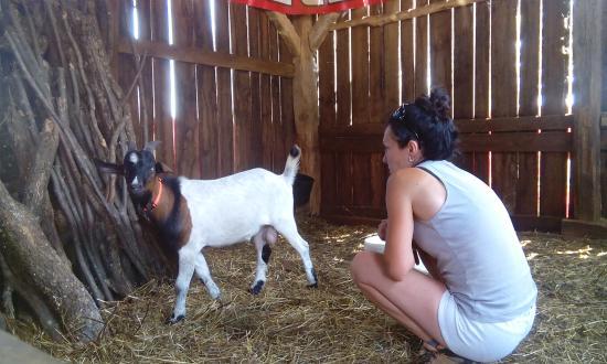 Karlovac County, Croacia: Josef the goat