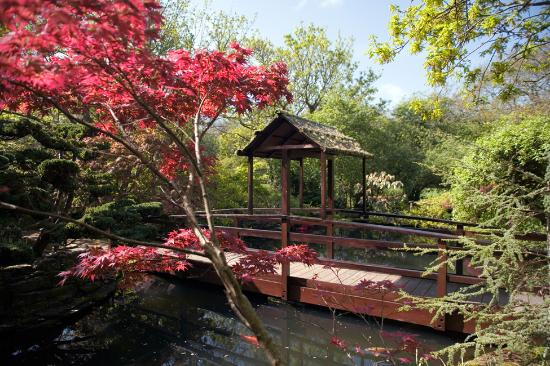 The Japanese Garden: Red acer over the pond
