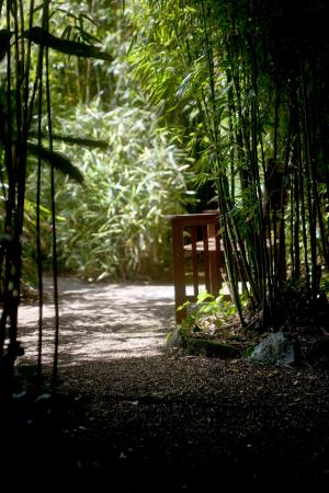 The Japanese Garden: The bamboo grove