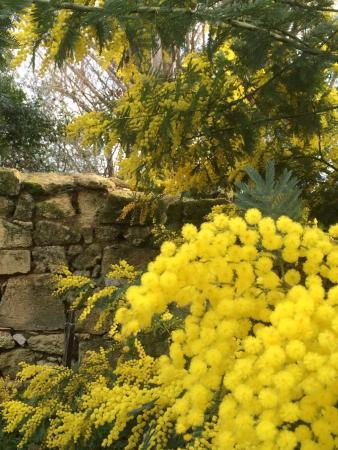 Nerigean, Francia: jardin 2