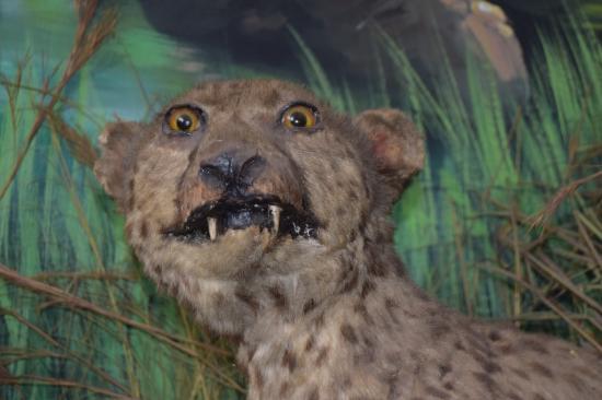 Must See At Natural History Museum