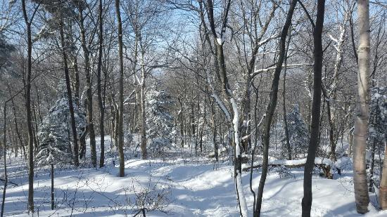 Parc d'environnement Naturel de Sutton張圖片