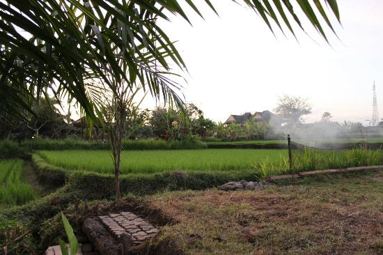 view from the balcony picture of suly vegetarian resort spa rh tripadvisor com