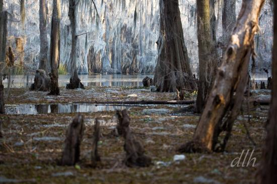 Billy Carter's Go-Devil Tours: Caddo Lake is like stepping into another world!