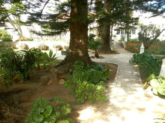 Quinta Paraiso da Mia : Part of the garden 2