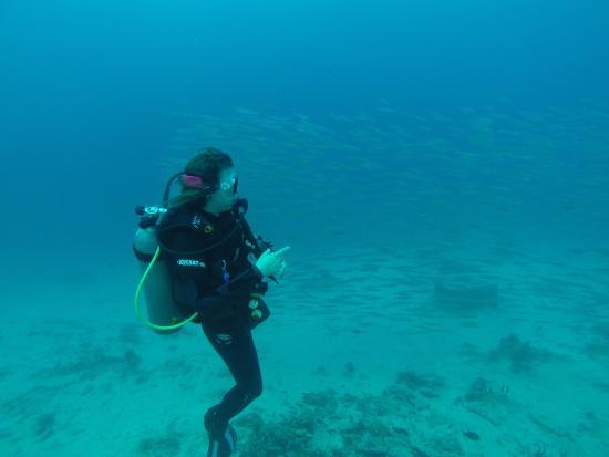 Diving with manta dive picture of manta dive gili trawangan tripadvisor - Manta dive gili ...