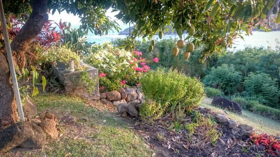 Westerhall, Grenada: The most delicious mangoes from the tree