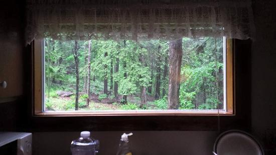 Stowe Cabins in the Woods: Woods from the kitchen window