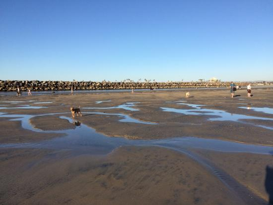 Low tide picture of ocean beach san diego tripadvisor for Tides for fishing san diego