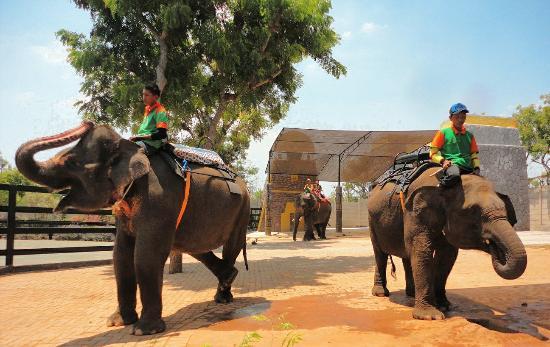 Gajah Sumatera Picture Of Maharani Zoo Caves Lamongan