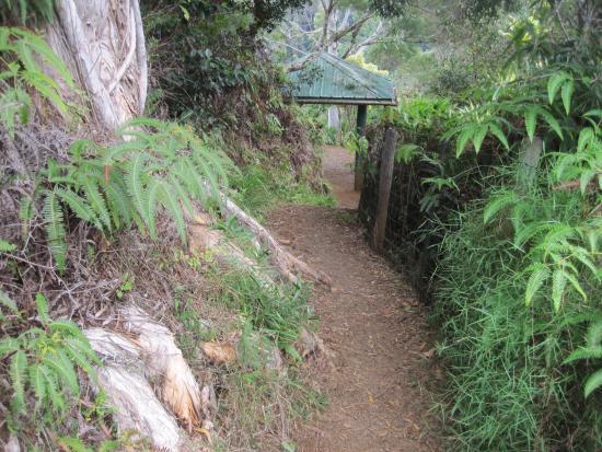 Maui Garden of Eden trail - Picture of Garden of Eden Arboretum ...