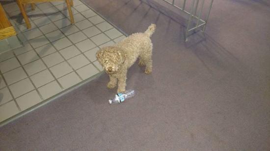 Mendon, Вермонт: Zaeley playing with us!