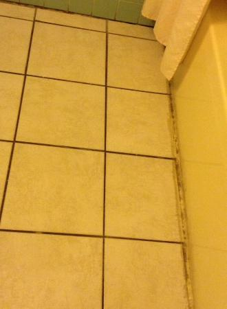 Budget Motel Titusville: Moldy tiles