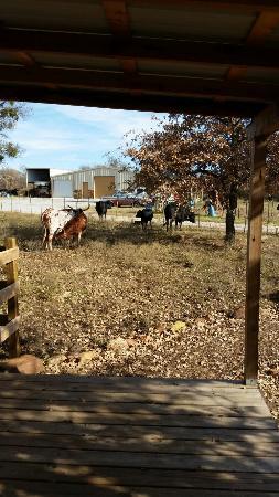Palo Pinto, TX: 20151211_140433_large.jpg