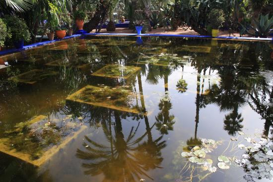 Le Bassin aux tortues merveilleux miroir il manque juste les ...