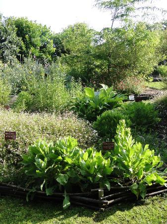 Jardin botanique de saint jean de luz 2018 ce qu 39 il for Jardin de luz