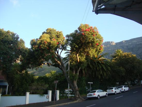Floreal House: view of Table Mountain from the street