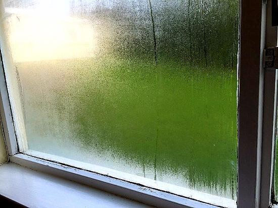 Single pane windows condensation mold