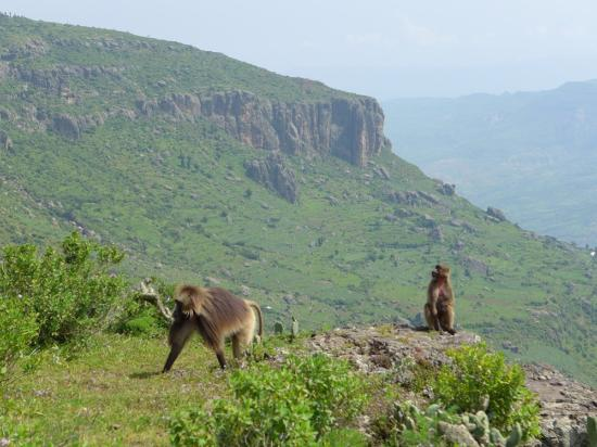 Debre Libanos, Эфиопия: Landscape