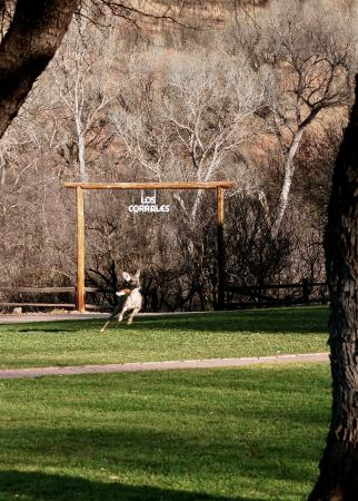 Circle Z Ranch : Oh, Deer!!