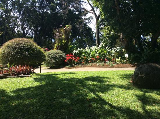 Un Arbre Magnifique Photo De Jardin Botanique De Deshaies Deshaies Tripadvisor
