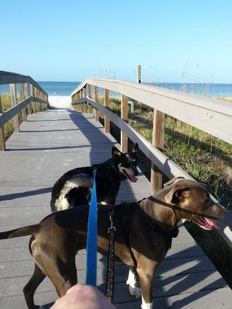 Pieces of Eight: Walk across Gulf Blvd right to beach!