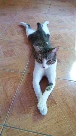 Hostel Matilori: Même le chat est peinard!