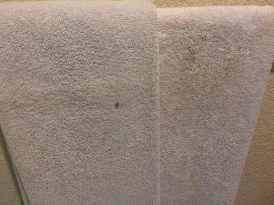 هوتل كورونا بلازا: The disgusting towels when I arrived. Do you want to rub this on your body?