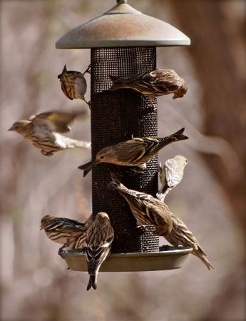 Paton's Hummingbird Haven: A busy feeding place for birds on a sunny January afternoon.