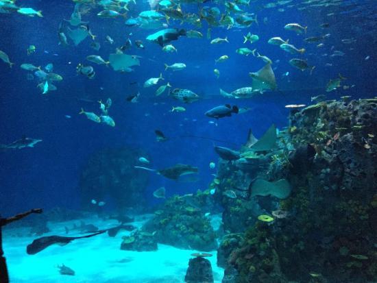 ... of Den Bla Planet, National Aquarium Denmark, Kastrup - TripAdvisor