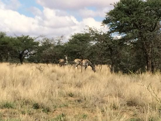 Sandveld Nature Reserve: Nature reserve section of the park (2)