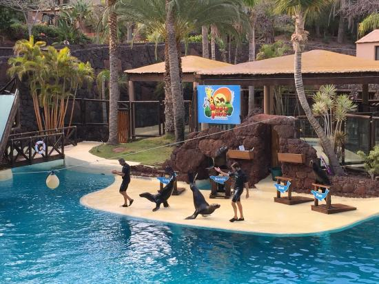 A great day at the zoo! - Picture of Oasis Park Fuerteventura, Fuerteventura ...