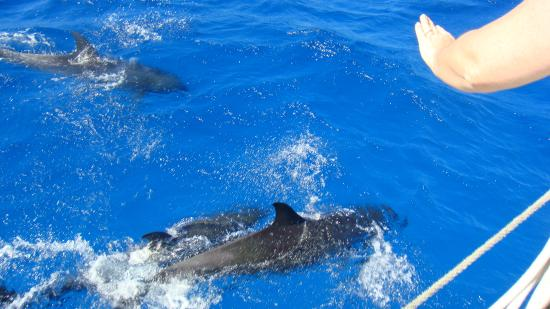 Cozumel Boat Trips : Dolphins swimming along with the sailboat!