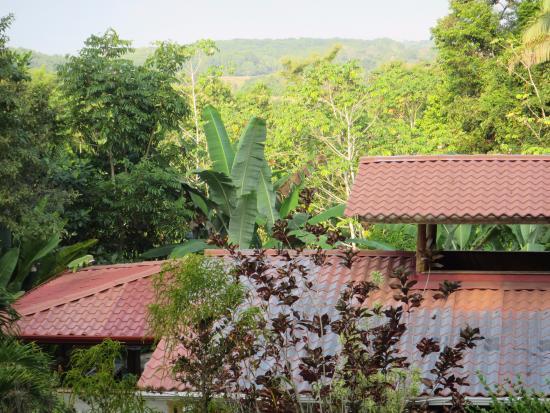 Manuel Antonio Surf School : A room with a view!
