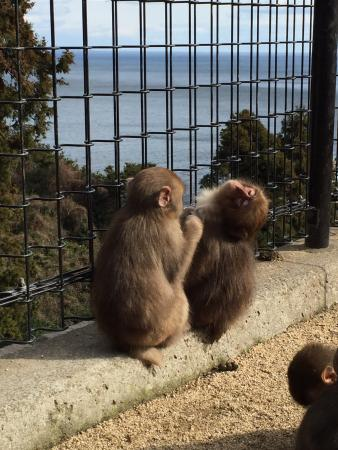 高崎山自然動物園 - Picture of Takasakiyama Natural Zoo, Oita - TripAdvisor