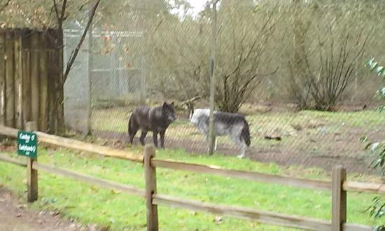 Wolf Haven International: Friends