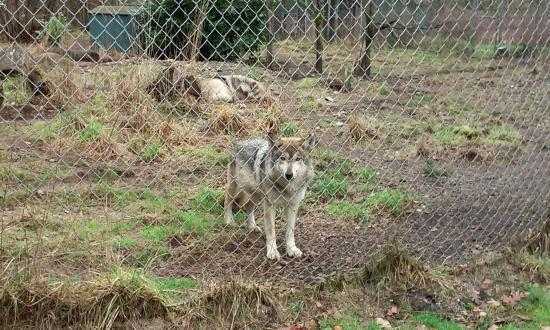 Wolf Haven International: See you!