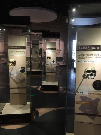 Nanjing Homo Erectus Fossil Site Museum