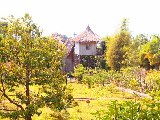 20160108 165300 large jpg picture of tree top bungalows kep rh tripadvisor com