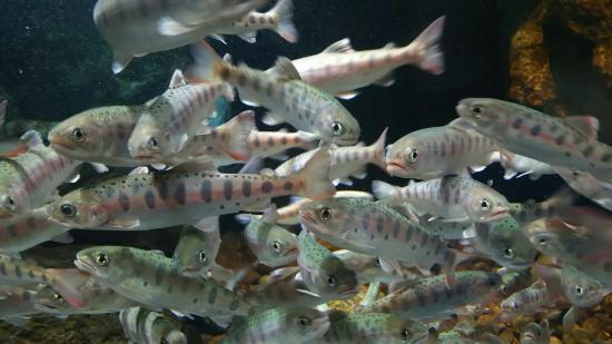 Sagamigawa Fureai Science Museum Aquarium Sagamihara