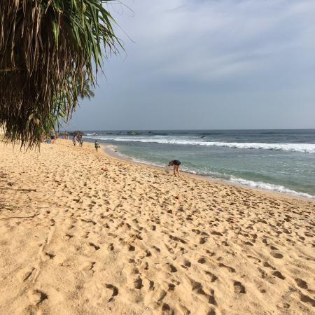 Dalawella Beach Resort: photo0.jpg