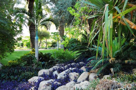 Ein Gedi Hotel : Ein Gedi Botanic Garden