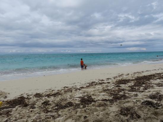 beautiful warm water soft sand yes seaweed picture of beaches rh tripadvisor com au