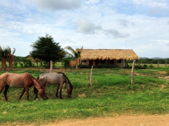 Tola, Nicaragua: Horses in front of our room