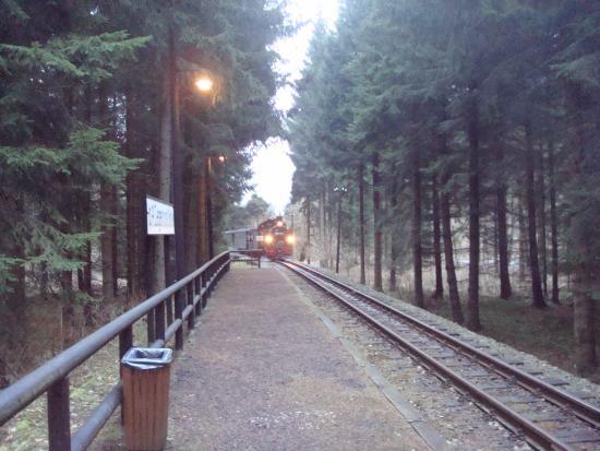 Joehstadt, Tyskland: Schön. wie der Zug aus dem Wald kommend, in einen Haltepunkt einfährt